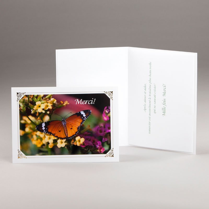 carte remerciement-papillon
