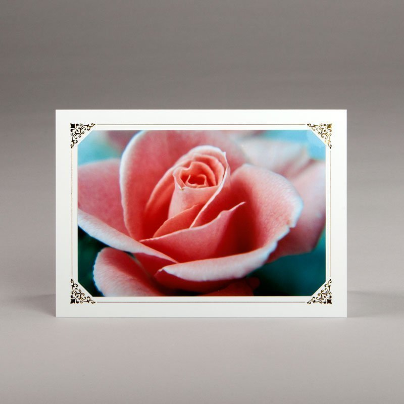 carte photos assorties-pétales de rose